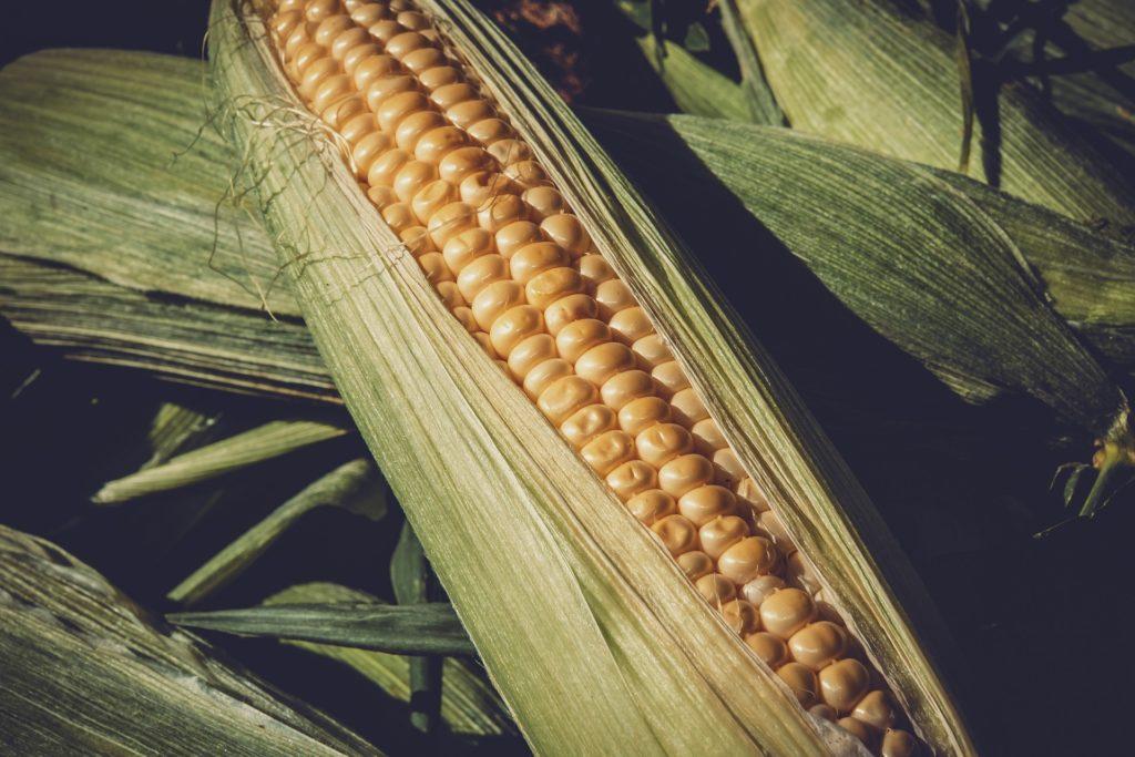 farine de maïs composition
