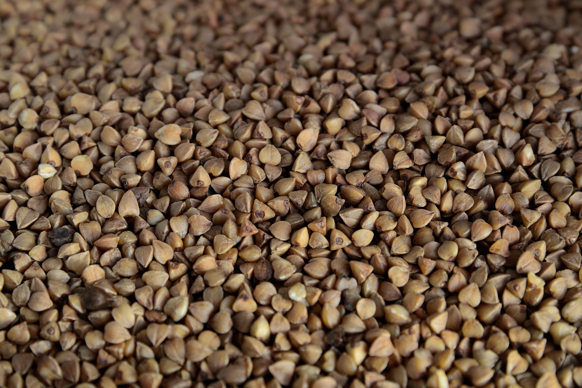 farine de sarrasin composition