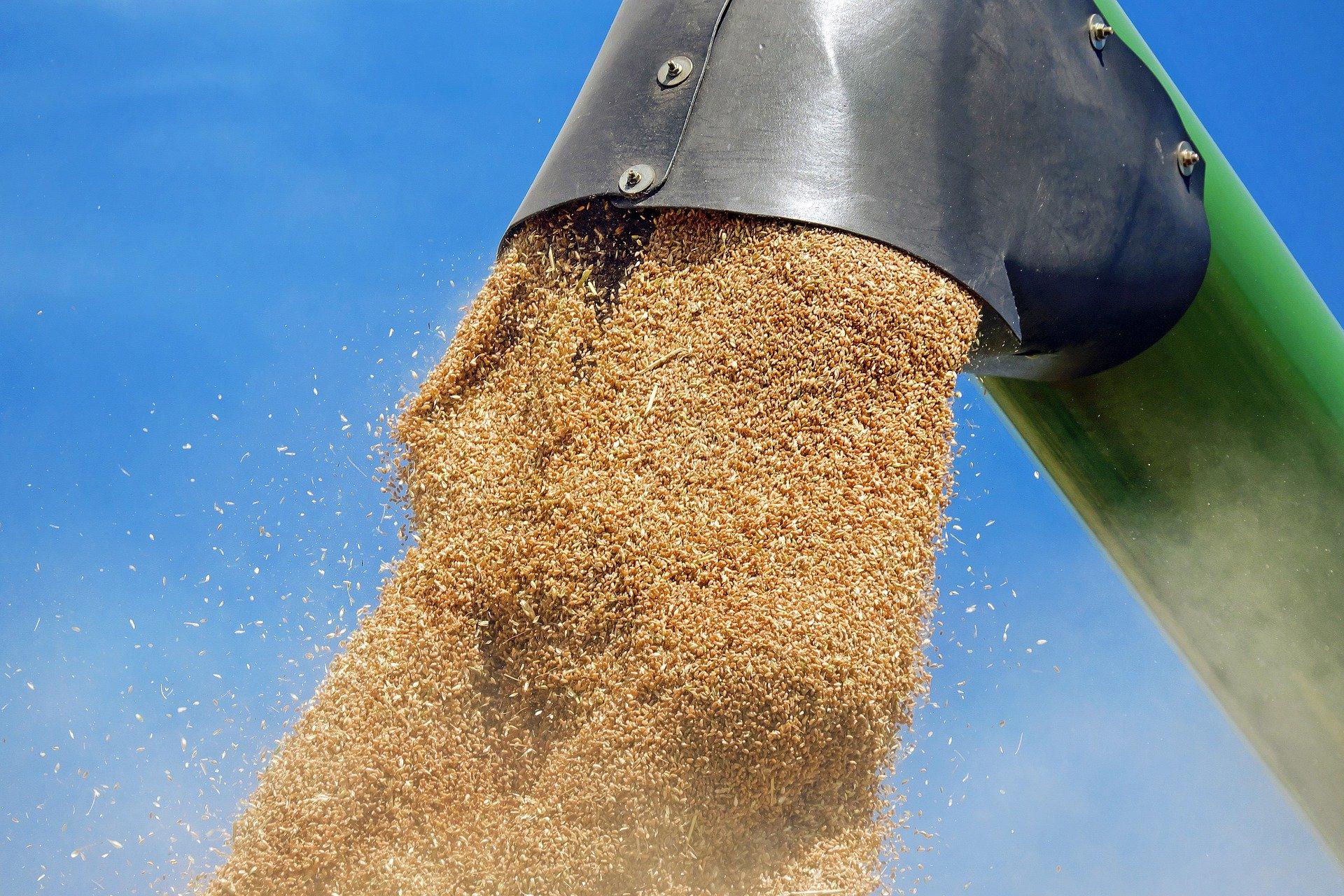 gluten et alimentation ant-inflammatoire
